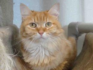 My dream cat, maybe, Dasher, in Sarasota
